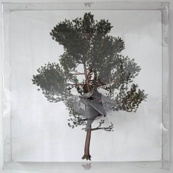 The Painted Distances (Pinus sylvestris) 2008, 3D drawing printed on Hahnemuhle cotton paper, polyester resin, laser-cutted PETG, urethane rubber, alluminium rivets, steel wire, plummets, handmoulded transparent PETG box on zinced plate